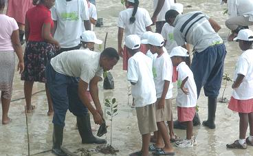 The launch of the coastal mangrove restoration project at Roche Caiman