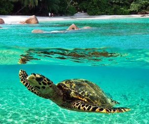 Conserving biodiversity and managing marine resources sustainably is everyone's business