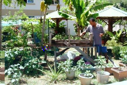 Tending the plants in the therapeutic garden
