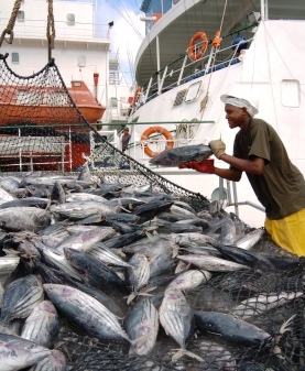 Transhipment of tuna in Port Victoria provides employment for stevedores