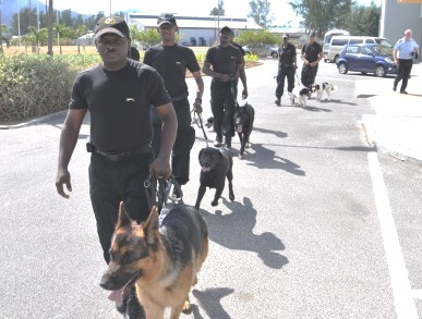 """Police officers showing off skills gained in a course at the UK's Surrey Police Dog Training School. Many of them have been following courses here and abroad """"and will continue"""" as the force launches security guards' training"""