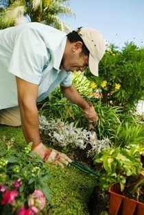 Studies have shown that simply being in a garden lowers blood pressure