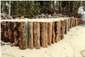 A closer look of the Anse Royale timber piling