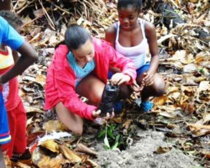 Children planting Bwa Torti plants in the Veuve Reserve on la Digue