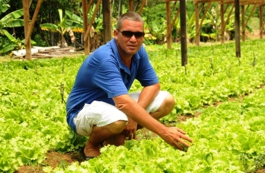 A bed of healthy, luscious lettuce at José Pool's farm at Anse Royale