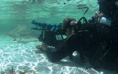 Filming underwater life