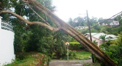A fallen tree on PUC electrical pole at Anse Royale