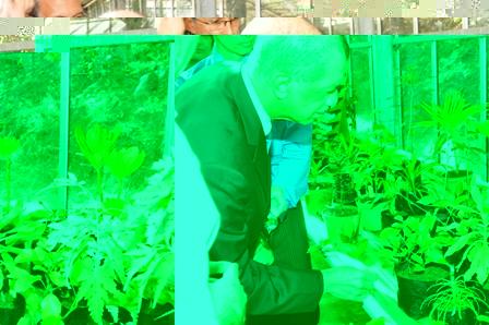 Le Chef d'Etat Seychellois regardant une plante de veloutier au Conservatoire Botanique National de La Réunion