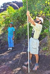 Dr Gérard Rocamora and Nathalie Andy erecting a mist-net to capture the Seychelles White-eyes. Photo by Mike Myers